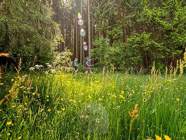 Hiking on the second valley trail, path near the Landwasser corner