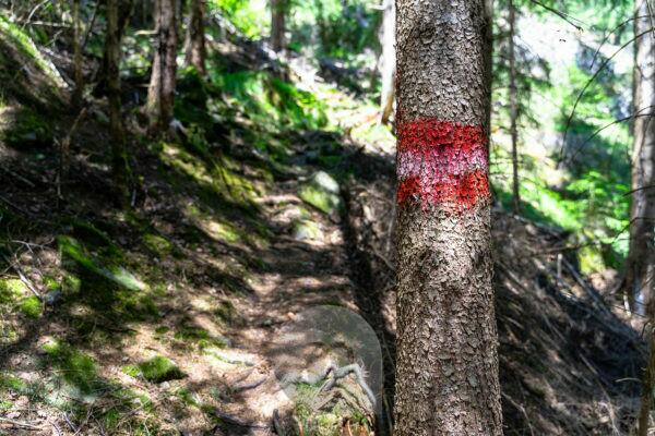 Europe, Austria, Tyrol, Ötztal Alps, Ötztal, simple path marking on a tree in the mountain forest