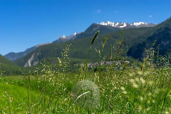 Europe, Austria, Tyrol, Ötztal Alps, Ötztal, summer meadow against mountain backdrop at Längenfeld