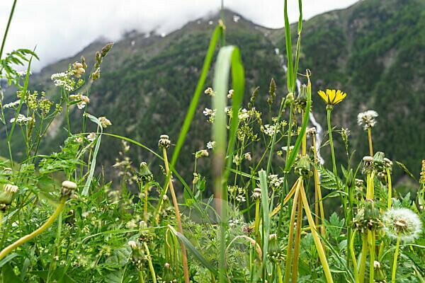 Europe, Austria, Tyrol, Ötztal Alps, Ötztal, mountain meadow in the Ötztal on a cloudy day