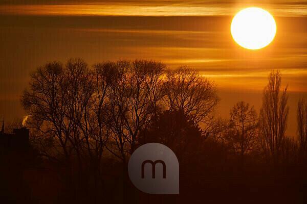 Sonnenuntergang mit orangenem Himmel und schwarzen Bäumen im Vordergrund