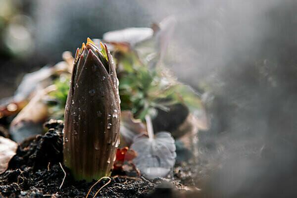 Plant, bud, blur