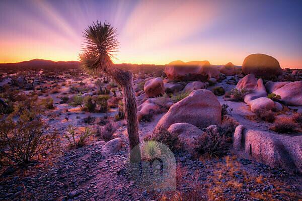 USA, United States of America, california, palm Springs, Joshua Tree National Park, jumbo rocks campground, white King campground,